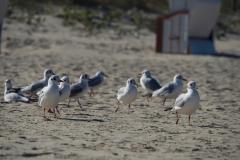 Vögel des Strandes