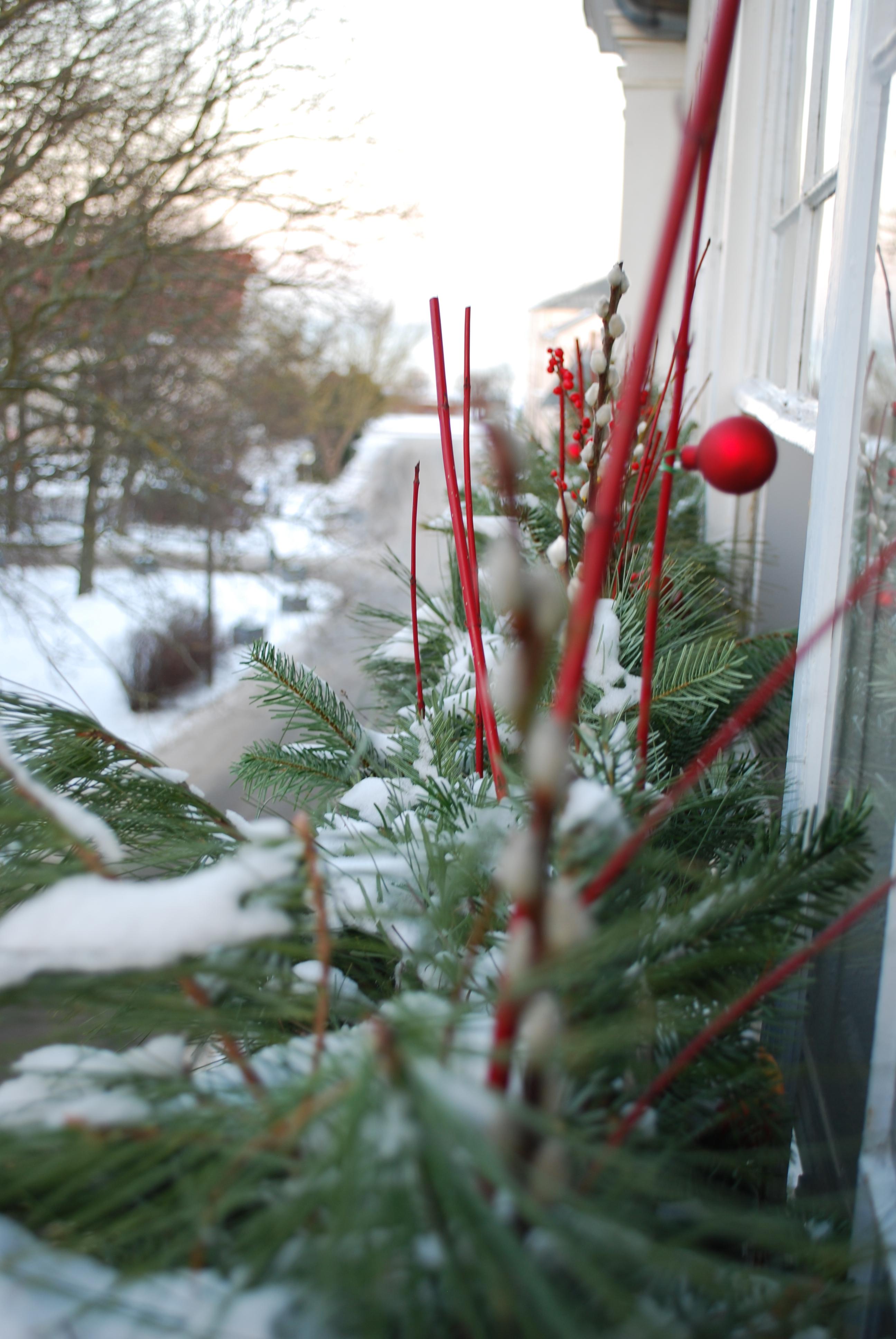 Winterblick aus dem Wintergarten